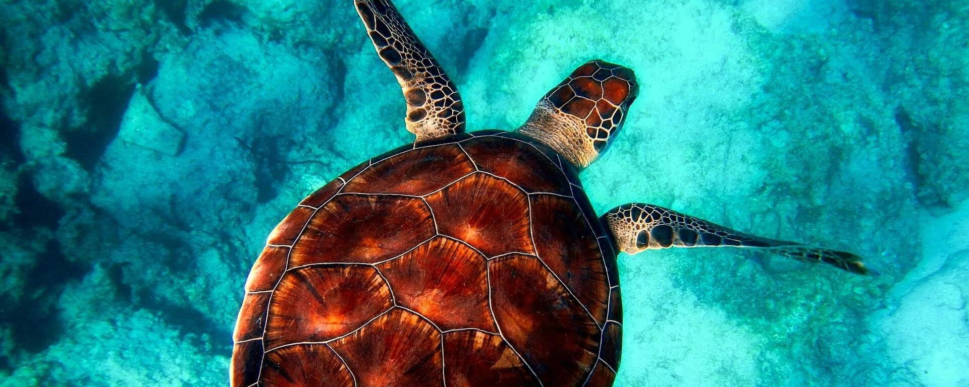 sea turtle hawaii