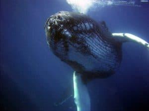 swim with whale