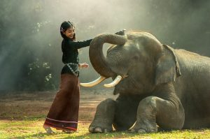 bucket list pet elephant