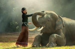 bucket list pet elephant