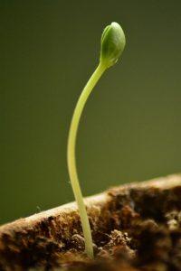 bucket list plant tree watch grow
