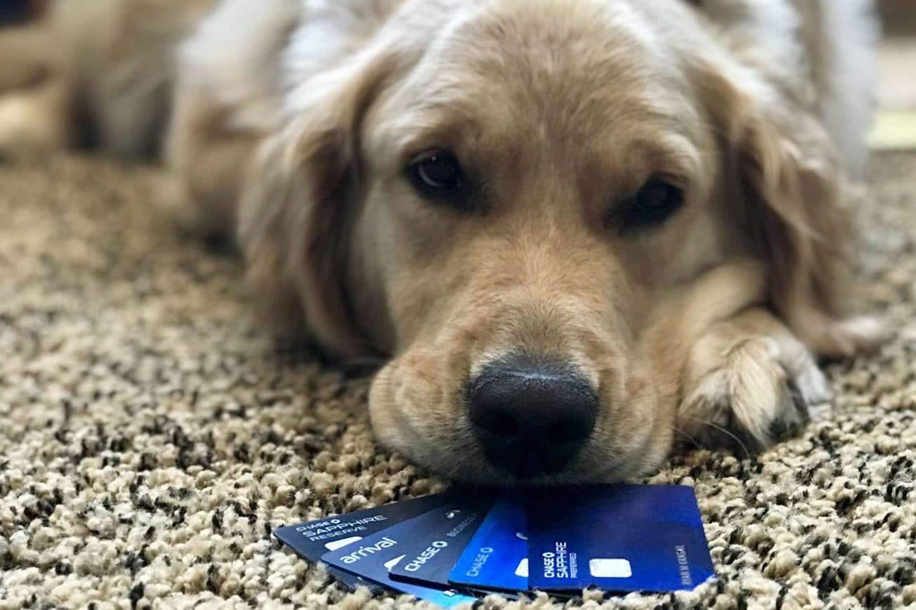 best travel credit cards dog